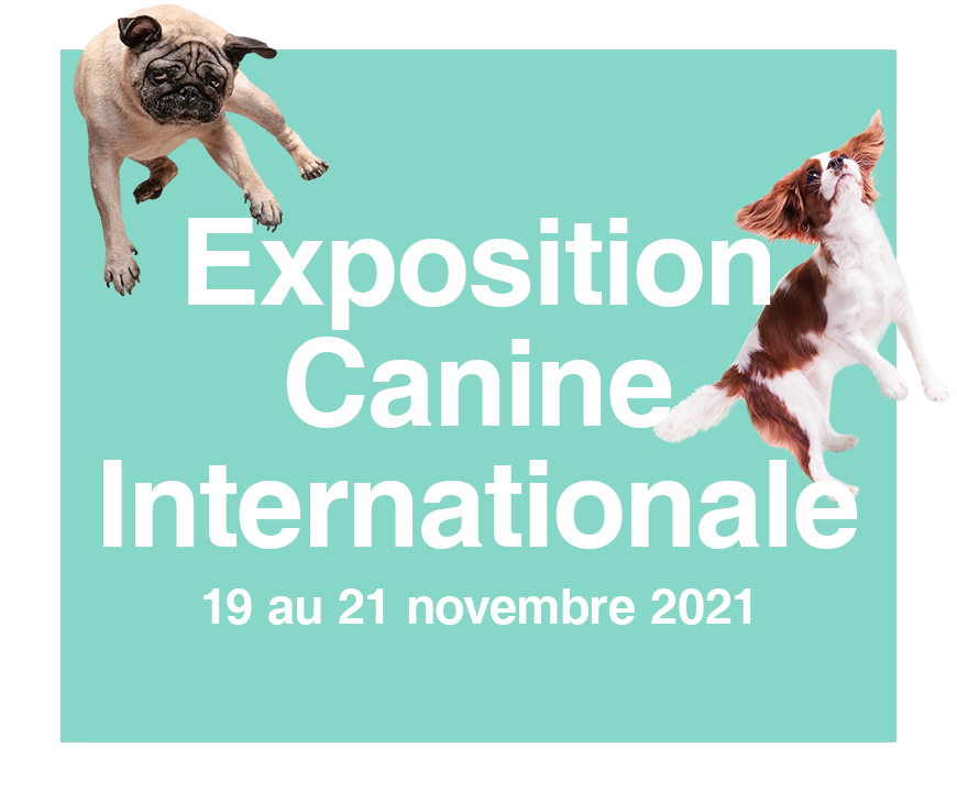 Vignette Exposition Canine Internationale 2021