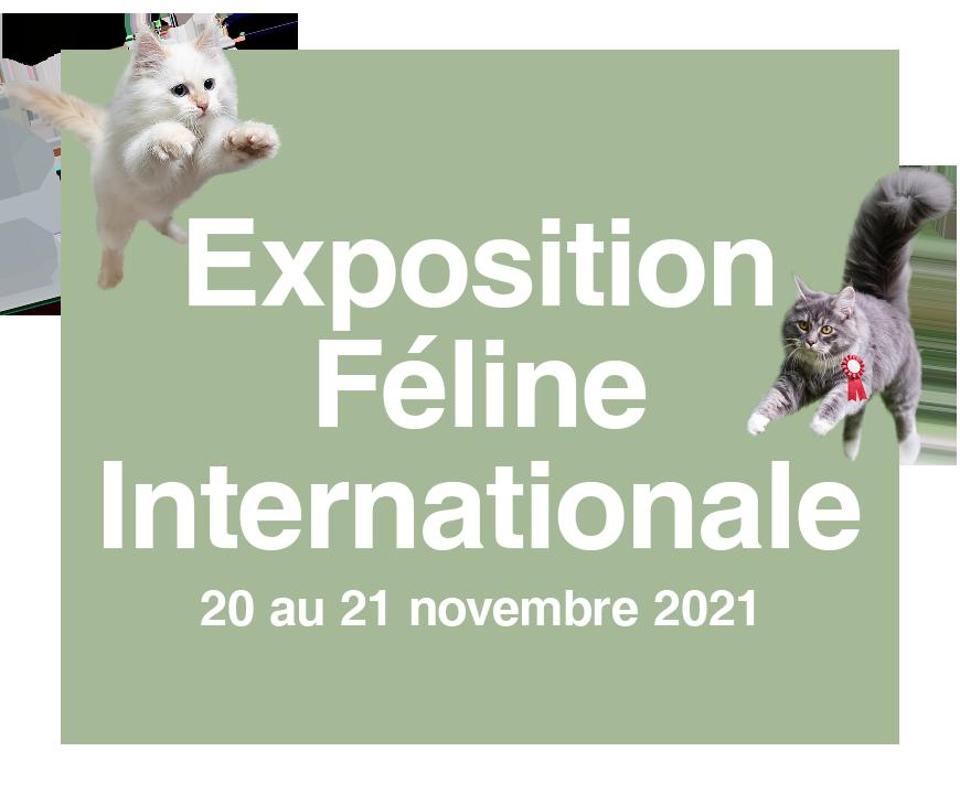 Vignette Exposition Féline Internationale 2021